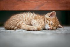 甜甜地睡觉我小的猫 免版税图库摄影