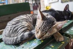 甜甜地睡觉的小猫 库存照片