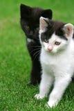 甜的小猫 免版税图库摄影
