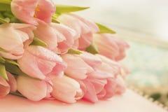 甜精美郁金香软的嫩背景与露水特写镜头的 春天花,抽象浪漫淡色花卉 库存图片