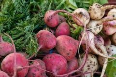 甜菜农夫市场 免版税库存图片