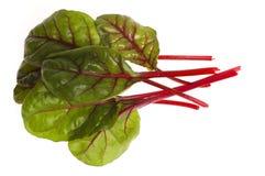 甜菜新鲜的菠菜蔬菜 免版税图库摄影