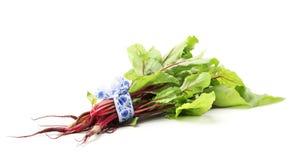 甜菜绿叶 免版税库存照片