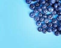 甜蓝莓一张顶视图在明亮的蓝色背景的 成熟和未加工的莓果特写镜头  夏天饮食的鲜美蓝莓 库存照片