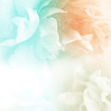 甜颜色玫瑰在软性开花并且弄脏在桑树纸纹理的样式 免版税图库摄影