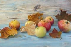甜水多的新鲜的红色苹果和槭树叶子在老灰色木桌上 木土气秋天背景 免版税库存图片