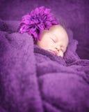 甜婴孩睡眠 免版税库存图片