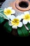 甜黄色被烘烤的花和老葡萄酒 库存照片