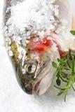 生了酒垢的盐鳟鱼 免版税库存照片