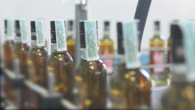 生产和装瓶的生产线酒精饮料 酒客的生产的工厂 股票视频