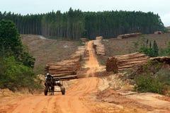 生产木头 免版税图库摄影