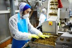生产海草沙拉 库存图片
