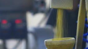 生产甜玉米快餐在工厂 股票视频