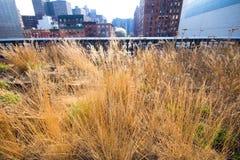 生产线上限nyc公园 免版税库存照片