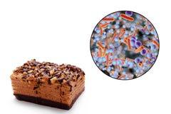 生产食物环节中的传染,医疗概念 免版税库存图片