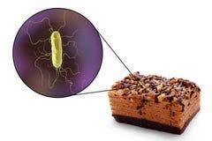 生产食物环节中的传染,医疗概念 免版税图库摄影