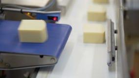生产食物 乳酪厂制造过程 在制造业线的乳酪轮子在食用植物 股票视频