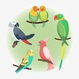 生动动画片热带鹦鹉野生动物鸟传染媒介例证野生生物羽毛动物园颜色的自然 免版税库存照片