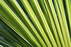 生动叶状体绿色的掌上型计算机 库存照片