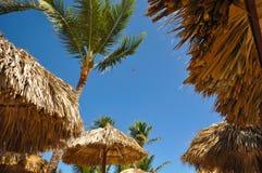 生动描述棕榈树和沙滩伞在蓝色背景  免版税图库摄影