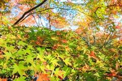 生动的叶子在晴天 库存照片