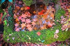 生动的叶子有自然背景 免版税库存图片