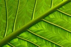 生动的叶子 免版税图库摄影