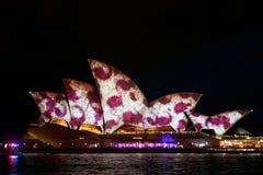生动的悉尼:灯节,音乐 库存照片