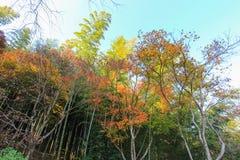 生动的森林在晴天 免版税库存照片