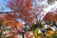 生动的森林在晴天 库存图片