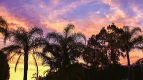 生动的热带日出 澳洲 免版税图库摄影