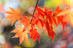 生动的秋天叶子有自然背景 库存照片