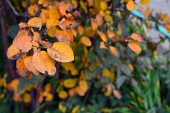 生动的秋天叶子背景 库存图片