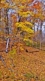 生动的秋天叶子黄色和桔子  库存照片