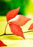 生动的红色秋叶 库存照片