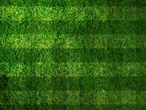 生动的草绿色 图库摄影