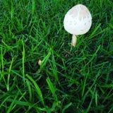 生动的蘑菇 图库摄影