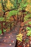 生动秋天的风景 免版税库存图片