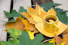 生叶在一杯茶在一个茶碟的有秋天le的一片黄色叶子的 库存图片