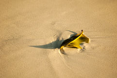生叶在海滩在素林海岛,泰国 库存照片