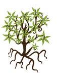 生叶结构树 免版税库存照片