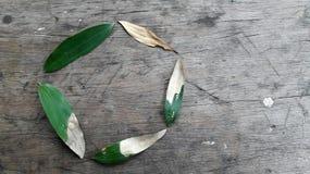 生命周期,如果反对土气木背景的一片金合欢叶子 免版税库存图片