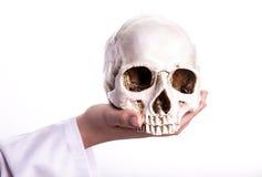 医生在他的手上的握一块头骨 库存图片