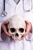 医生在他的手上的握一块头骨 免版税库存照片