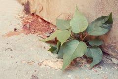 生存在水泥地面的植物 免版税库存图片