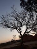 生存树 库存照片