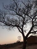 生存树 库存图片