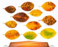 生存绿色棕色明亮的叶子的汇集在病残的点的 套在白色的秋叶 库存图片