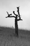 生存许多山风暴的老死的树 免版税图库摄影