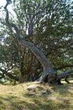 生存结构树 库存照片